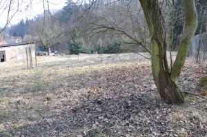 Foto von der Wiese, auf der Garten entstehen soll.